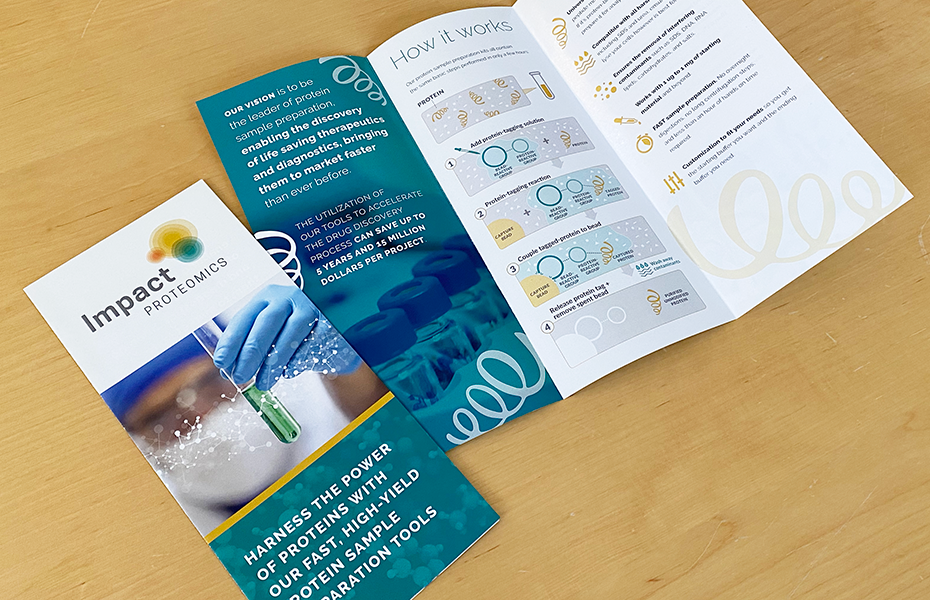 Impact Proteomics Logo and Brochure by Muffinman Studios