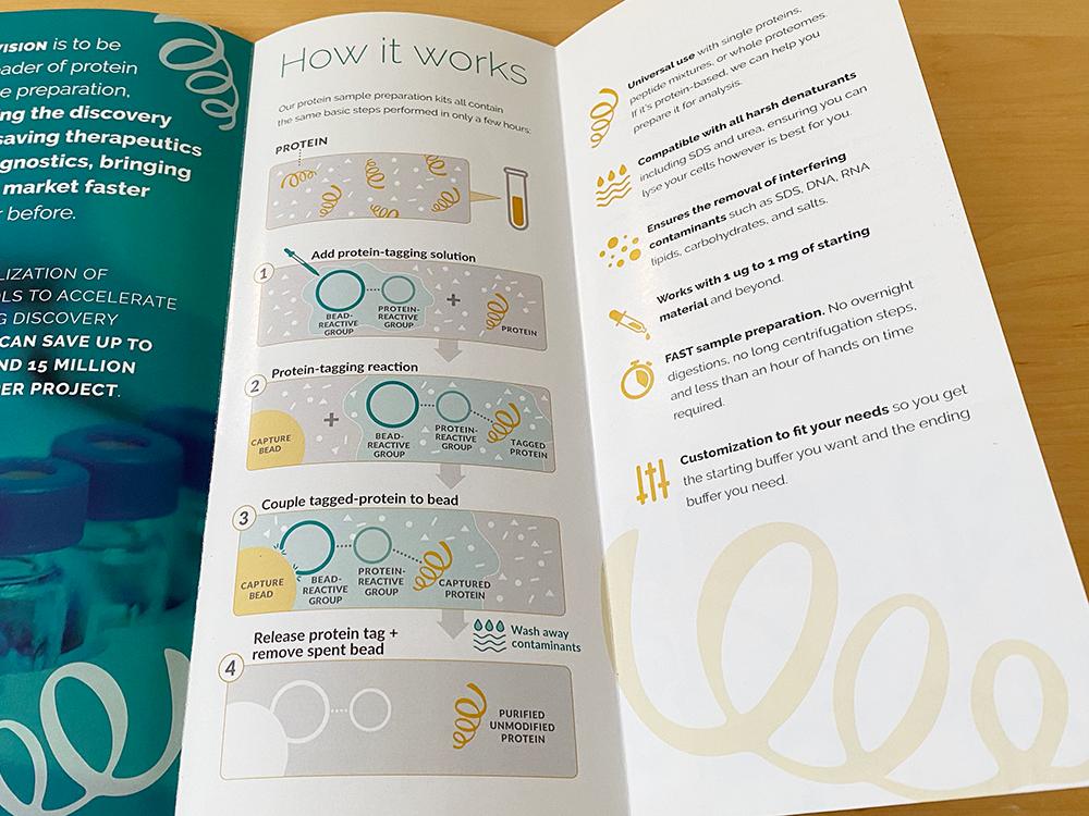 Impact Proteomics Logo and Brochure by Muffinman Studios